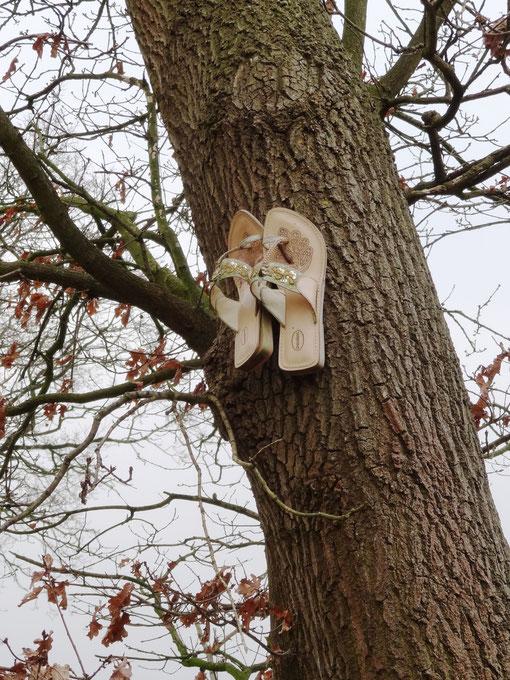 norddeutscher Hochzeitsbrauch Brautschuhe annageln Baum bei Wittstedt Heise Oberheise Hollen Hollenerheide Hollenerkamp