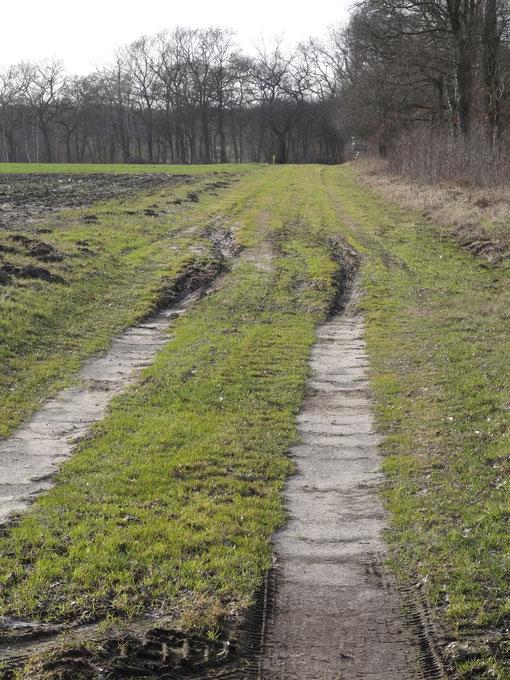 Reisebericht Radfahren Harrendorf Finnaerberg Finna Bramstedt Kransmoor Bokel Langenfelde