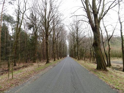 Allee von Wittstedt nach Bramstedt Bokel Kranzmoor Langenfelde