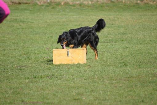 Cayuga beschäftigt sich mit der Kiste