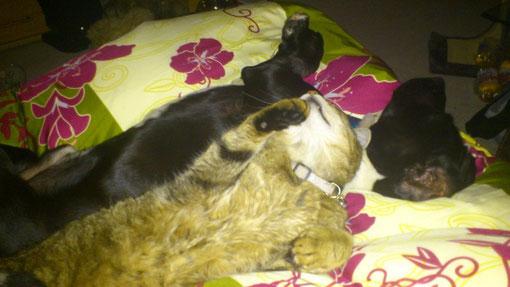 nicht wie Hund und Katz, sondern beste Freunde