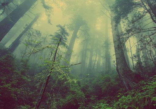 umweltfreundliches Leben