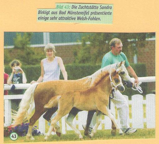 2006 Rheinlands Reiter + Pferde