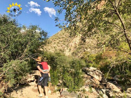 Wandern im Sabino Canyon mit Kind.
