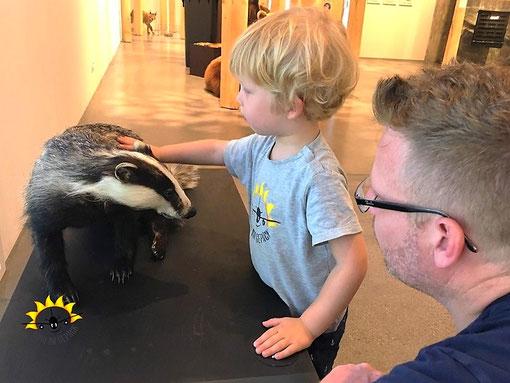 Tiere streicheln im Naturmuseum SG