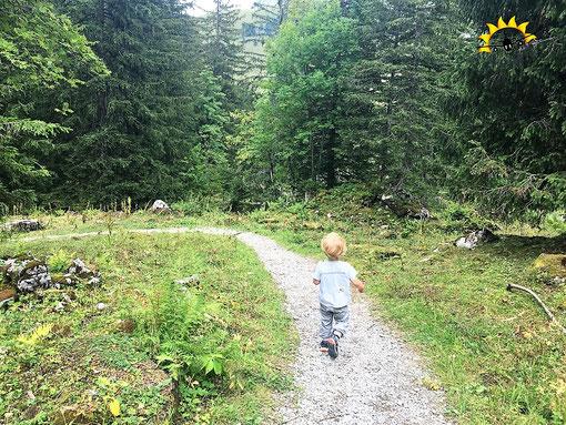 Der Alpwirtschaft-Wanderweg führt zunächst durch waldiges Gebiet.