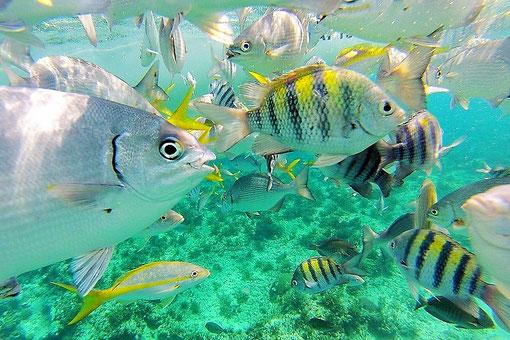 ...und das kubanische Leben unter Wasser.