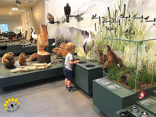Ganz viel Natur erleben im Naturmuseum St. Gallen