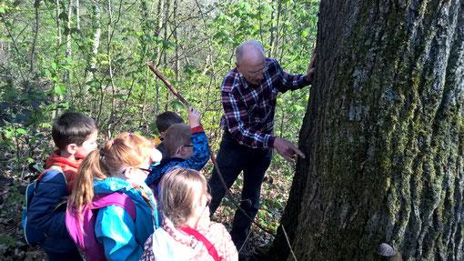 © NABU Region Trier - Kinder erkunden den Wald