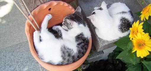 Katzen auf dem Hanauer Hof