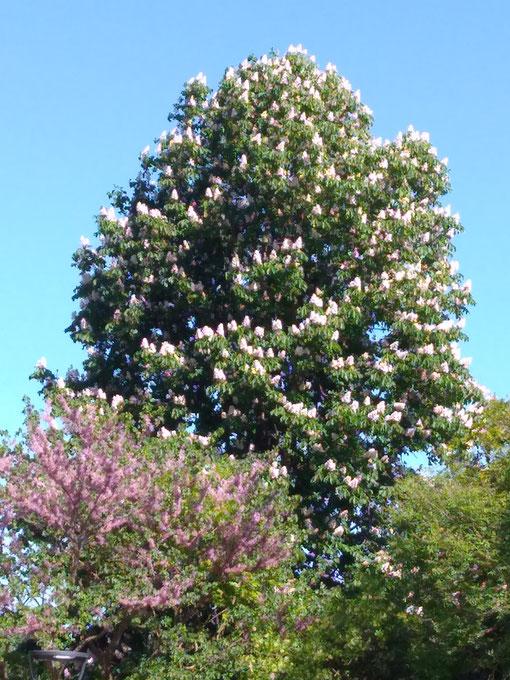Baum-Weg zur Klarheit