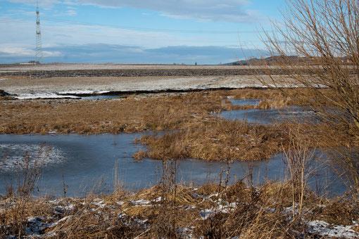 unser NABU-Biotop im Winter