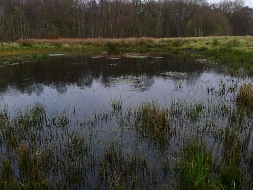 Ein Tümpel im Grünlandbereich
