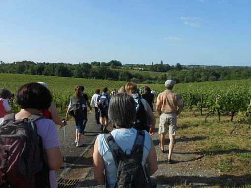 Randonnée pédestre à travers le vignoble. Photographie Marie Raducanu