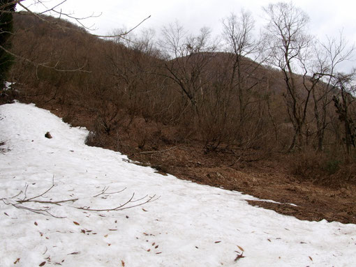 斜面には雪が残っており、ウスバサイシンは全く芽吹いていません。ヤマエンゴサクやカタクリの花も咲いていませんので、ゴールデンウィーク後半でしょうか。こんな遅い状況は初めてです。