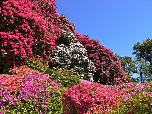 Italien Reise :fantastische Blumenfotos in der Villa Carlotta am Comersee