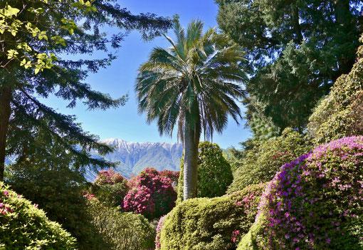 Palmen und Schnee am Comersee Italien