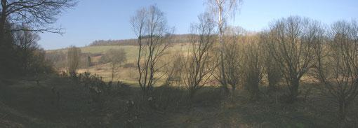 Panorama der Kopfweiden.