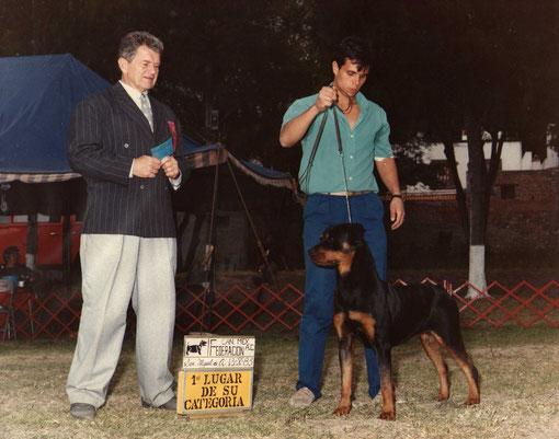 primeros rottweiler 1985