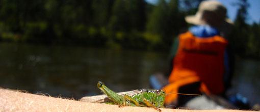 Beaucoup d'insectes et de fleurs dans les paysages verdoyants du Khentii