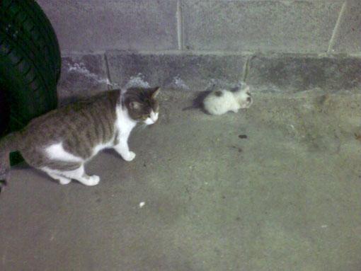 Né le 10/09/2011 Figaro avec sa maman