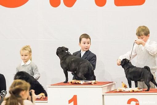 стаффордширский бультерьер конкурс ребенок и собака