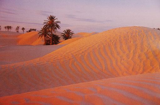 Einsamkeit wie auf See:  Quer durch die Sahara verläuft die Tunesisch-Algerische Grenze.