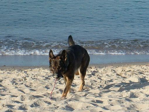Bonny am Strand (U. Richter)