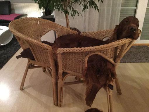 Zwei Stühle