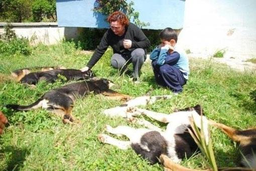Alltag Türkei, Tierrechte, Tierschutz, Tiermord