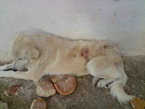 Hundeliga, FOÇA, Izmir, Türkei, Tierschutz