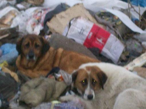 Bilecik, Türkeiurlaub, Tierquälerei, Müllhalde