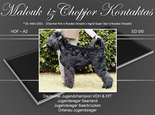 HD-Auswertung: Dr. Koch (KfT), ED-Auswertung: Tierklinik Spiesen-Elversberg