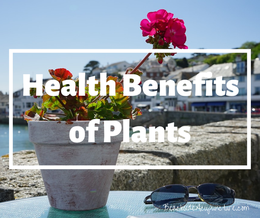 """Health Benefits of Plants"" on the Beachside blog, potted plant on ocean deck"