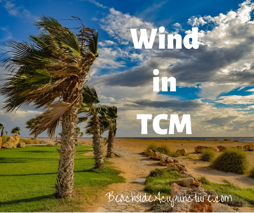 Wind in TCM over a beach with palm trees blowing in the breeze, BeachsideAcupuncture.com