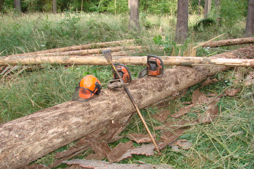 Käferholz entrinden manuell sowie mit Entrindunggerät für Motorsägen