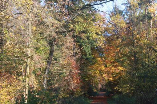 Wanderbeginn: Alte Ittersbacher Straße