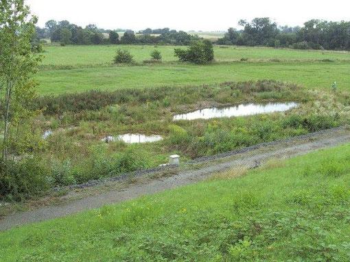 1. Ersatzlebensraum zwischen VDM-Deponie und Nidda  (2006)