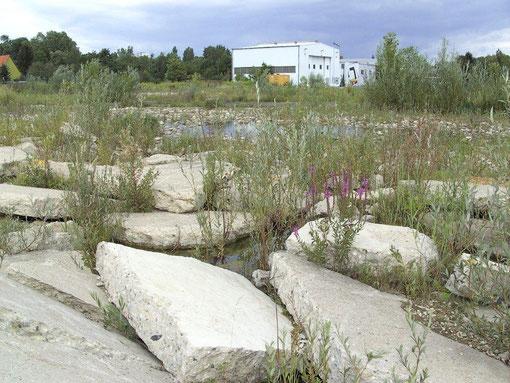 2. die unter Wasser stehenden Schollenfelder in Bonames  (2006)