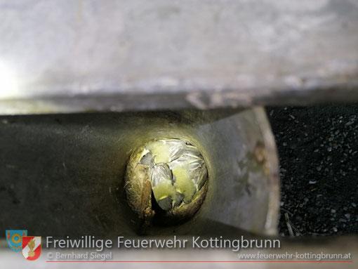 Feuerwehr; Blaulicht; FF Kottingbrunn; Vögel; Vogel; Tisch; Rohr;