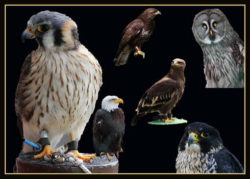 Uns und unsere Kumpel, könnt ihr im Vogelpark sehen