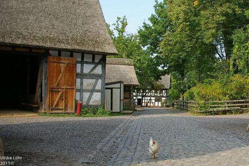 Huhn auf der Strasse im Museumsdorf Kommern