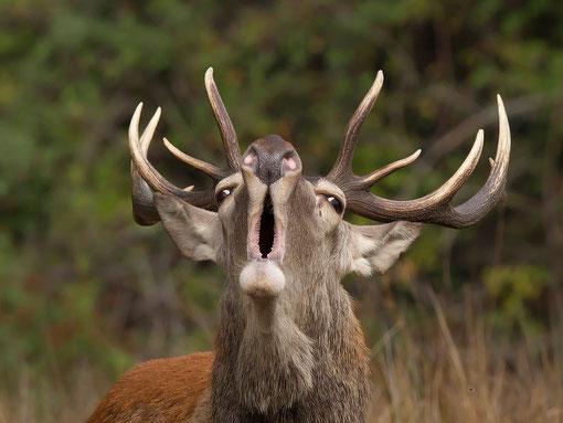 Cervo Sardo