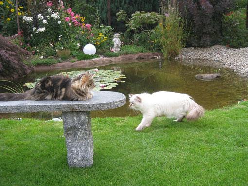 sie sind sehr gern am Teich