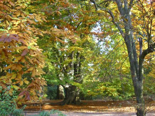 Herbst in Münster, WK