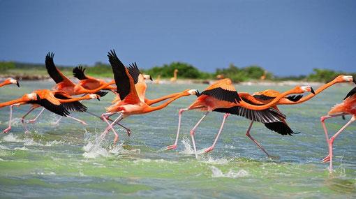 Fauna und Flora  an der Yucatan Kueste