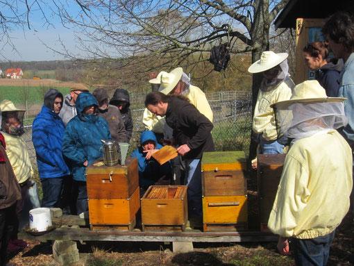 Immer wieder aufregend: die erste Durchsicht der Bienenvölker im Frühjahr.