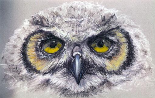 Junge Waldohreule, gezeichnet von Katrin Sdun (1994)