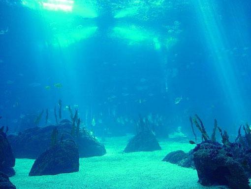 oxigeno en el fondo del Oceano