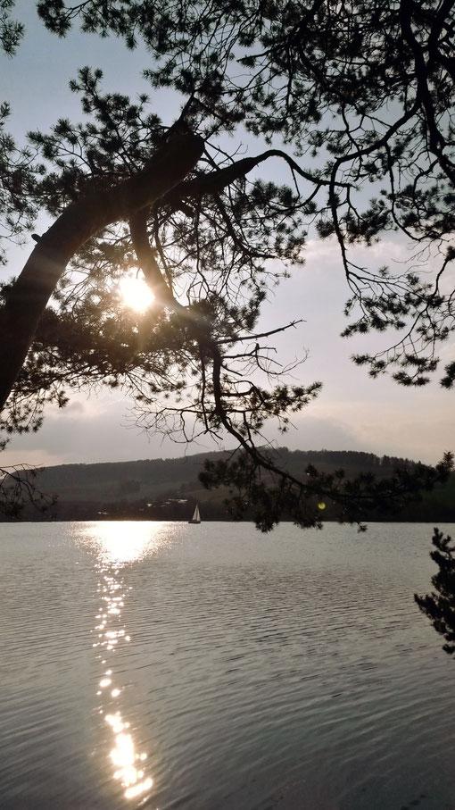 Kiefern und Segler vermitteln südländische Atmosphäre auf der Liebesinsel am Diemelsee
